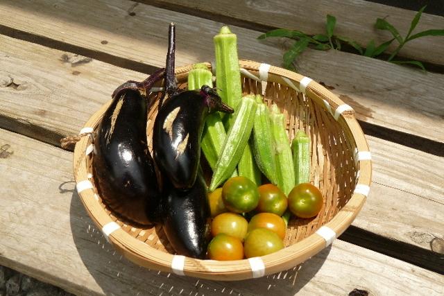夏野菜収穫.JPG
