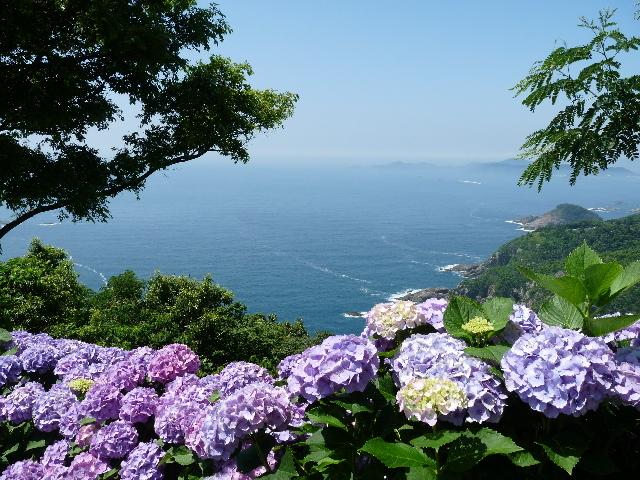 海と紫陽花.JPG